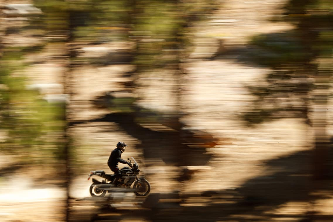 A Harley Davidson Pan America flashes through the trees